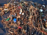Plastforurensning