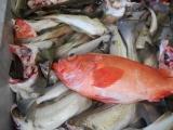 Tilhører fisken egentlig fellesskapet?